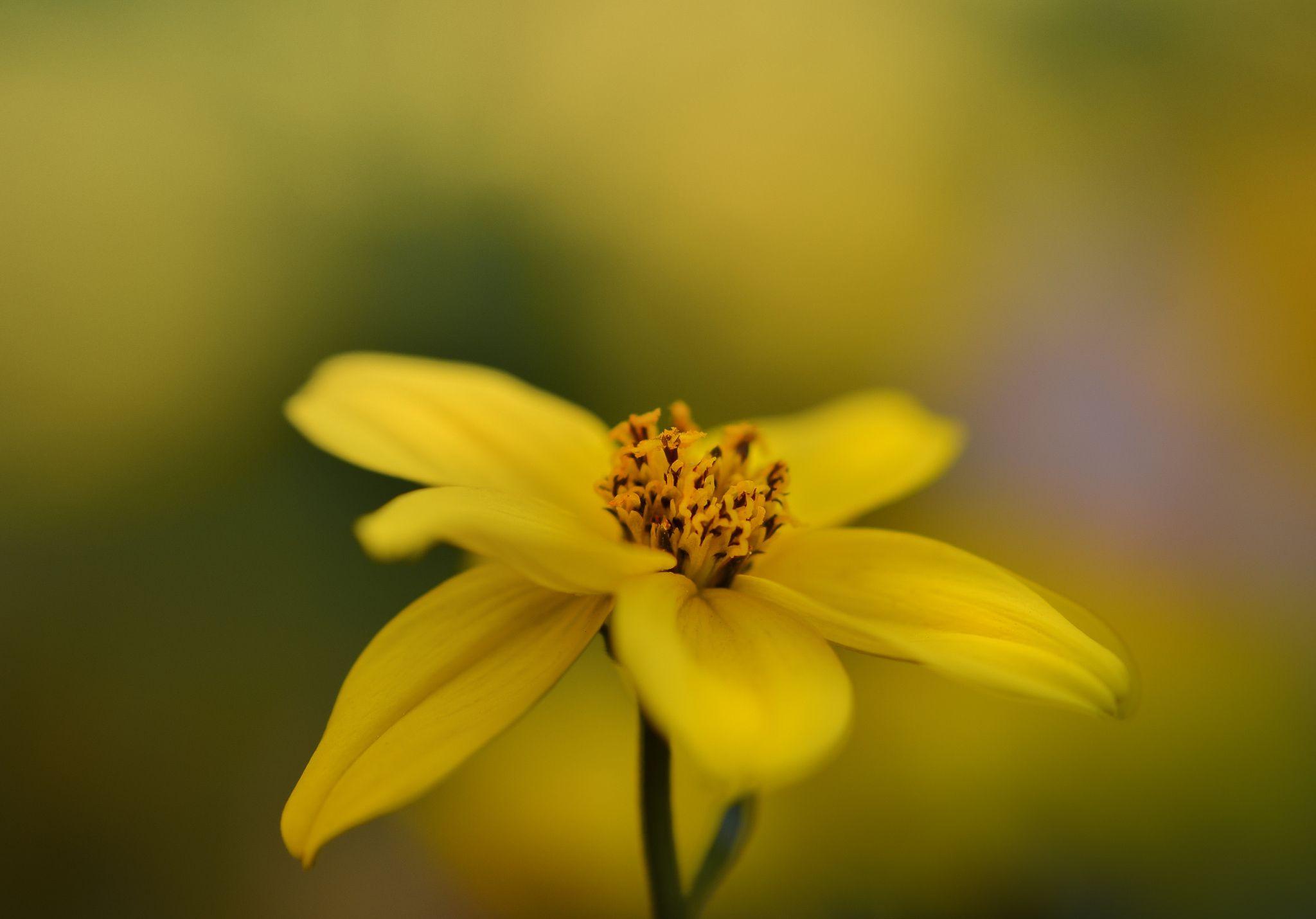 Thinking Yellow - null