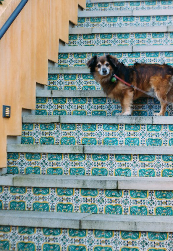 Dog Friendly Sausalito A List Of Fun Things To Do In Sausalito With Your Dog Pet Travel Dog Friends Year Of The Monkey