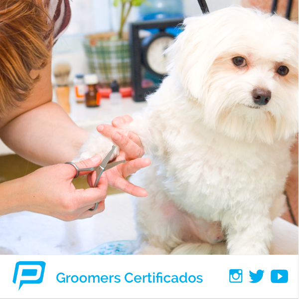 Pin On Pet Care Services
