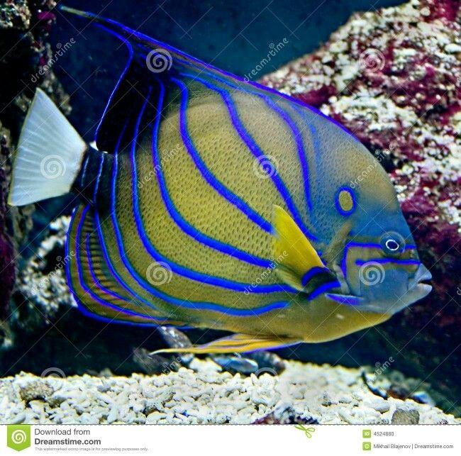 tropische vissen tropische vissen vissen vissen foto s