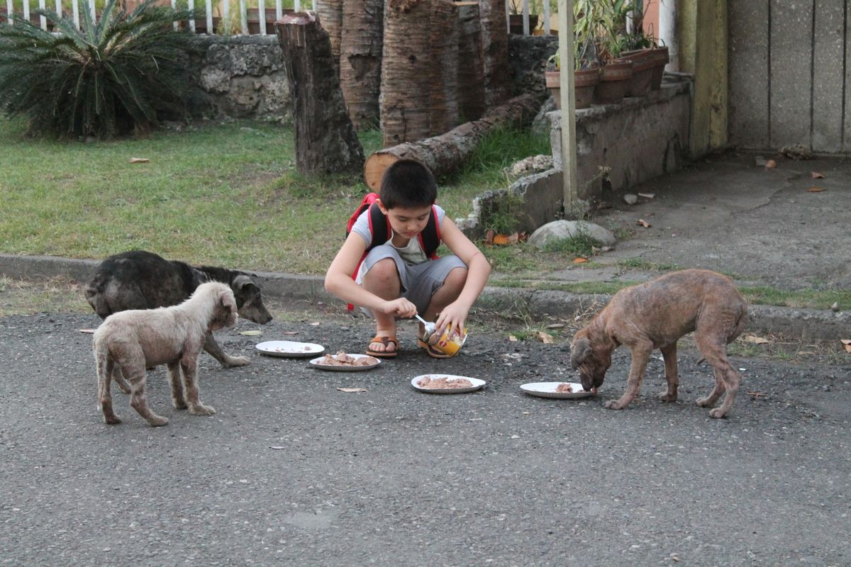 This 9 Year Old Built A Nonprofit No Kill Animal Shelter Out Of His Garage To Help Stray Animals Happy Animals Animals No Kill Animal Shelter