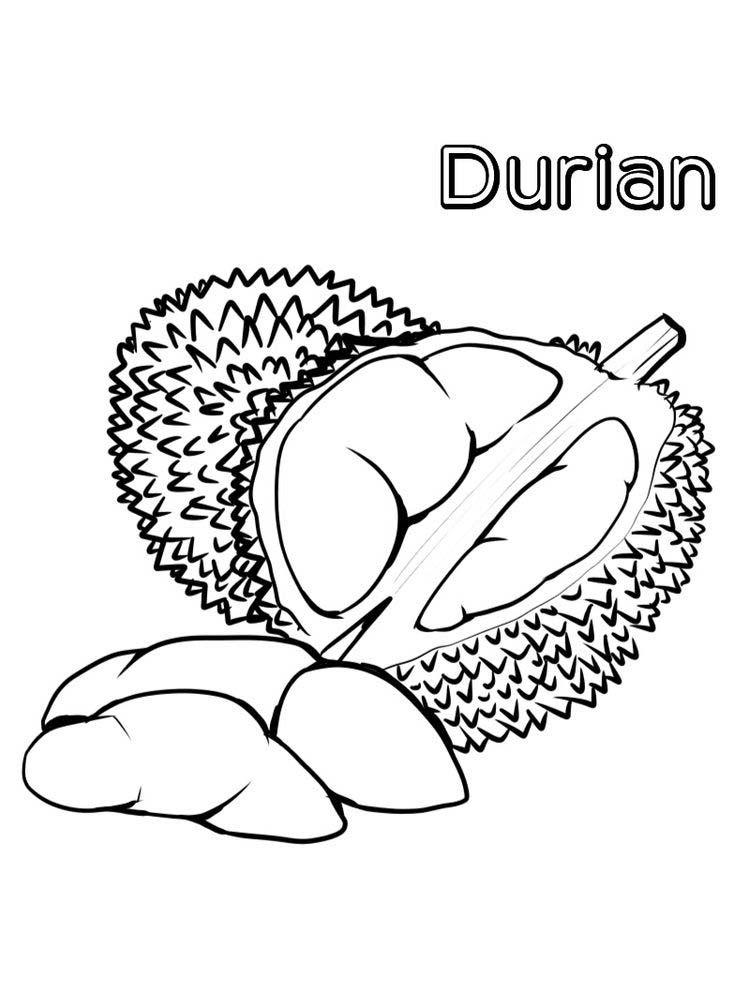 Durian Coloring Page Free ผลไม กรอบ