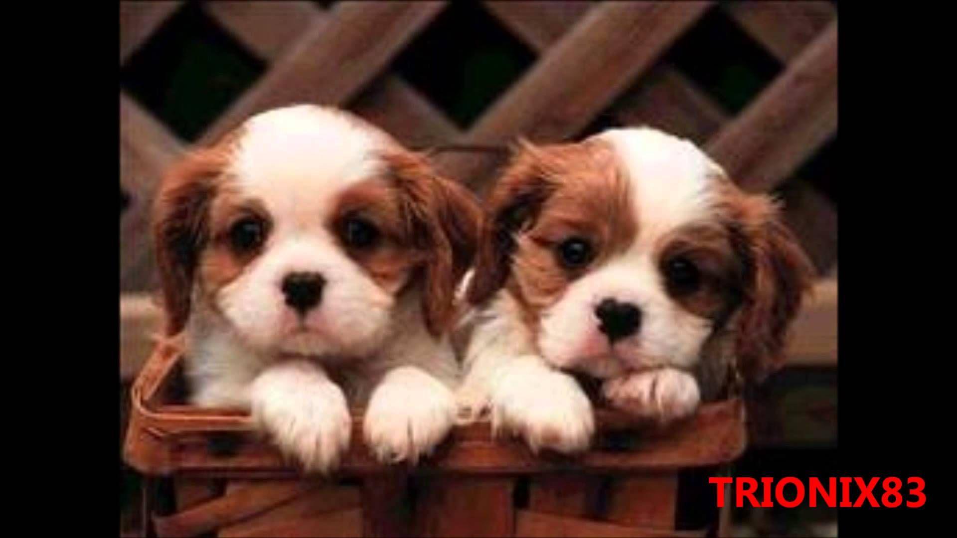 IMAGENES BONITAS Y TIERNAS Los perros mas bonitos del