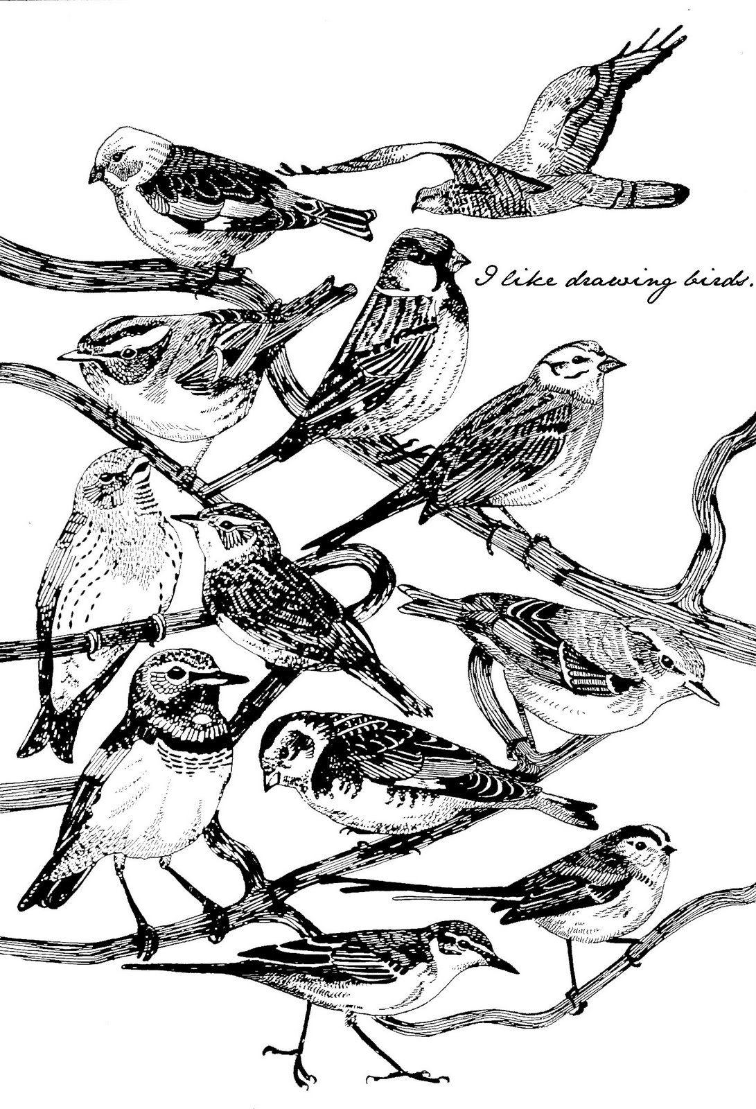 """i like drawing birds"""