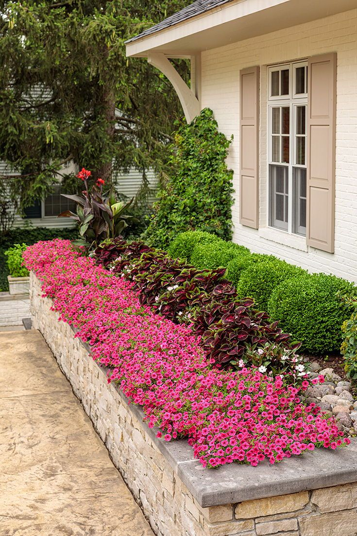 Photo of Hot Pink Petunias for Garden Beds & Beyond