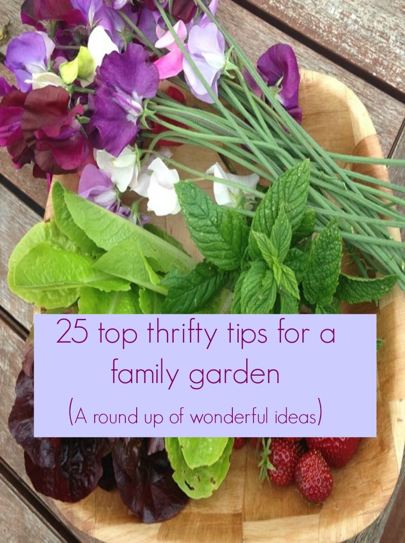 25 top thrifty tips for your family garden | Pinterest | Family ...