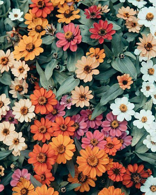 Flores Colores Garden Fondos De Flores Fondos Florales Y