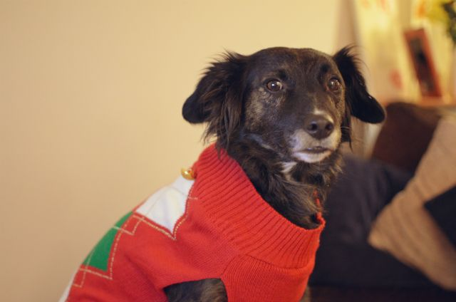 Dogs In Christmas Jumpers Novelty Christmas Jumpers Christmas Jumpers Pets
