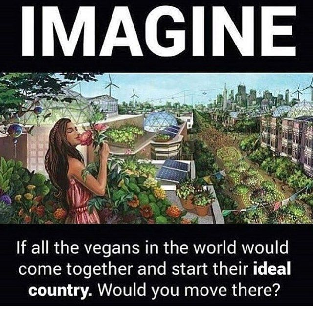 Image may contain: 1 person, text that says 'IMAGINE If all the vegans in the world would come together and start their ideal country. Would you move there?' #veganhumor