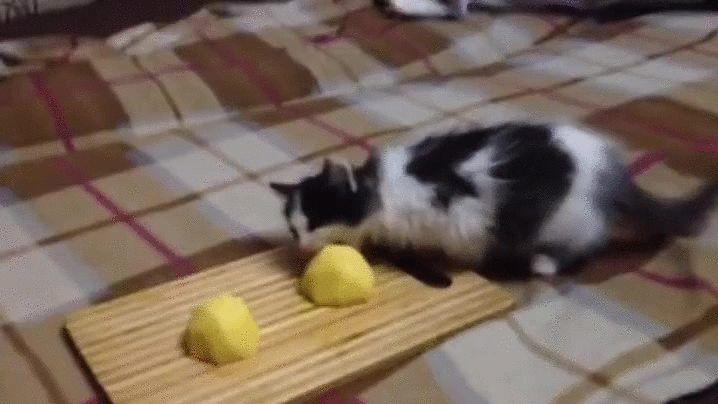 Potato Thief Cute Cats Kittens Cutest Crazy Cats