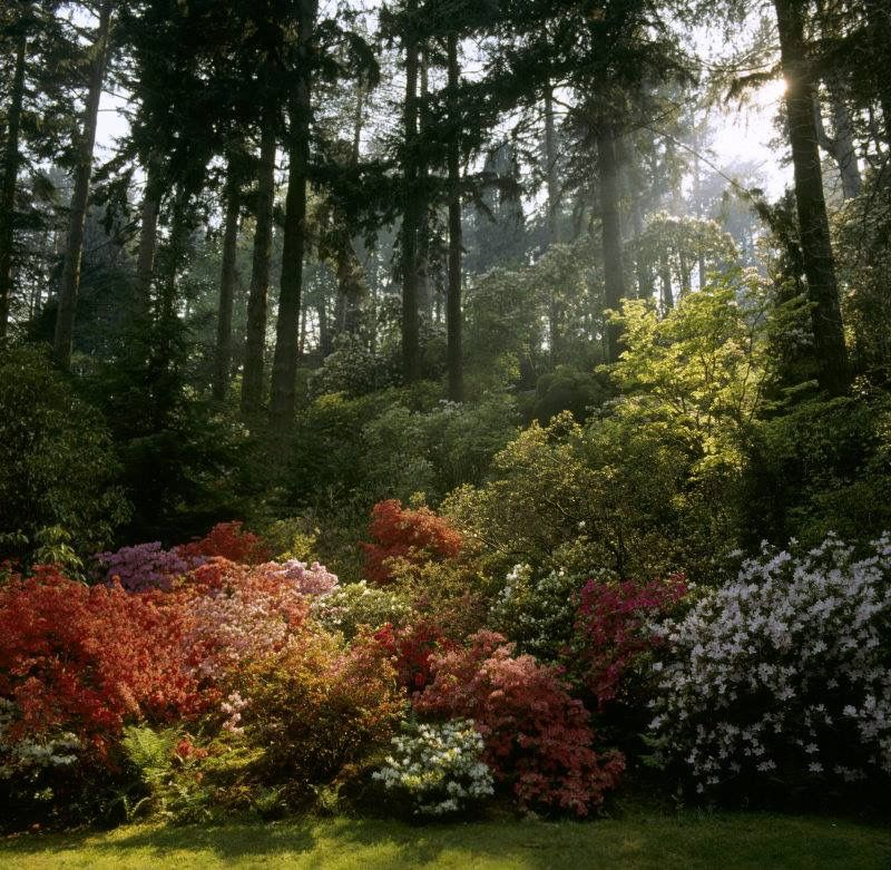 National Trust - Monday morning moment of peace: Bodnant Garden. Snowdrops are all but forgotten, daffodils are slowly bowing out for the season, but don't worry, the fiery reds and subtle pinks of the azaleas at Bodnant Garden will soon be providing an abundance of colour for you to enjoy.