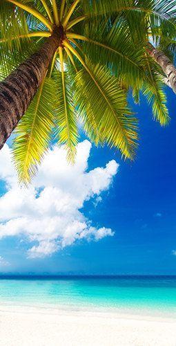 Palm Tree Overlooking the Beach Theme Light Weight