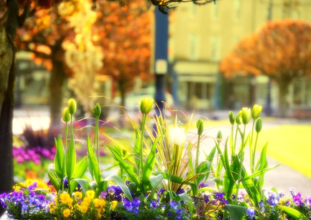 Flower Tub by James Bullis-King   Nature   Pinterest   Tubs