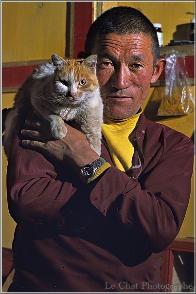 chat sur les épaules d\'un moine Tibétain | Les chats du tibet ...