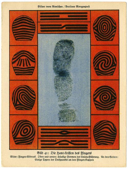 Bilder Vom Menschen 1931 Skin Structure Of Fingers Prints