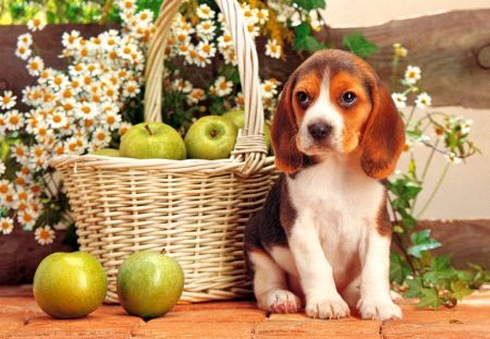 Cute puppy Dogs & Animals Background Wallpapers on
