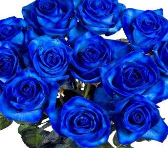 one dozen blue roses images dozen blue roses in metuchen