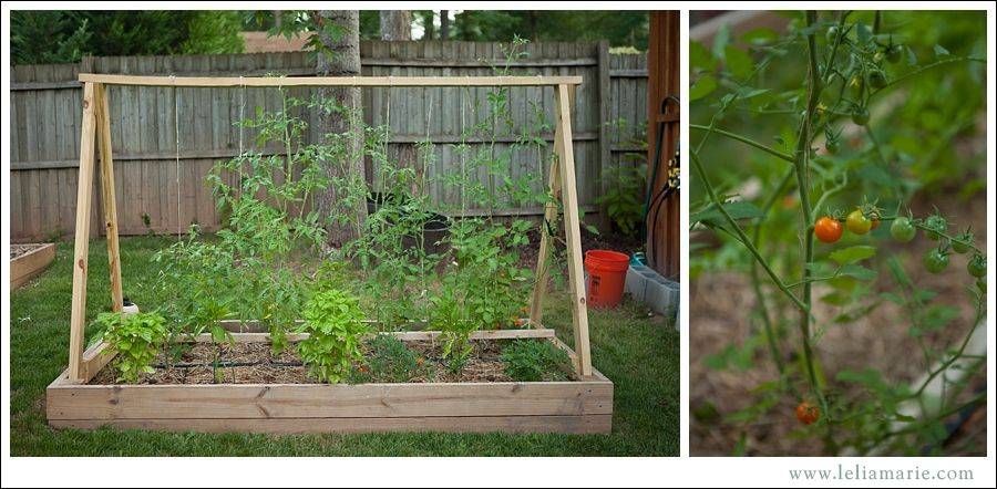 Lelia Marie Photography The Best Way To Grow Tomatoes 400 x 300