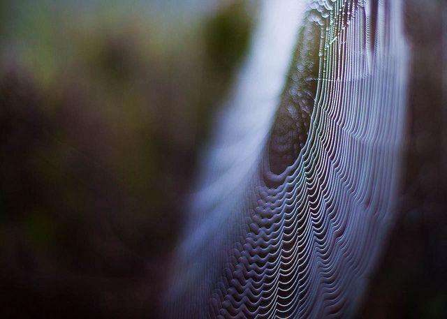 Artistic Spider | Flickr - Photo Sharing!