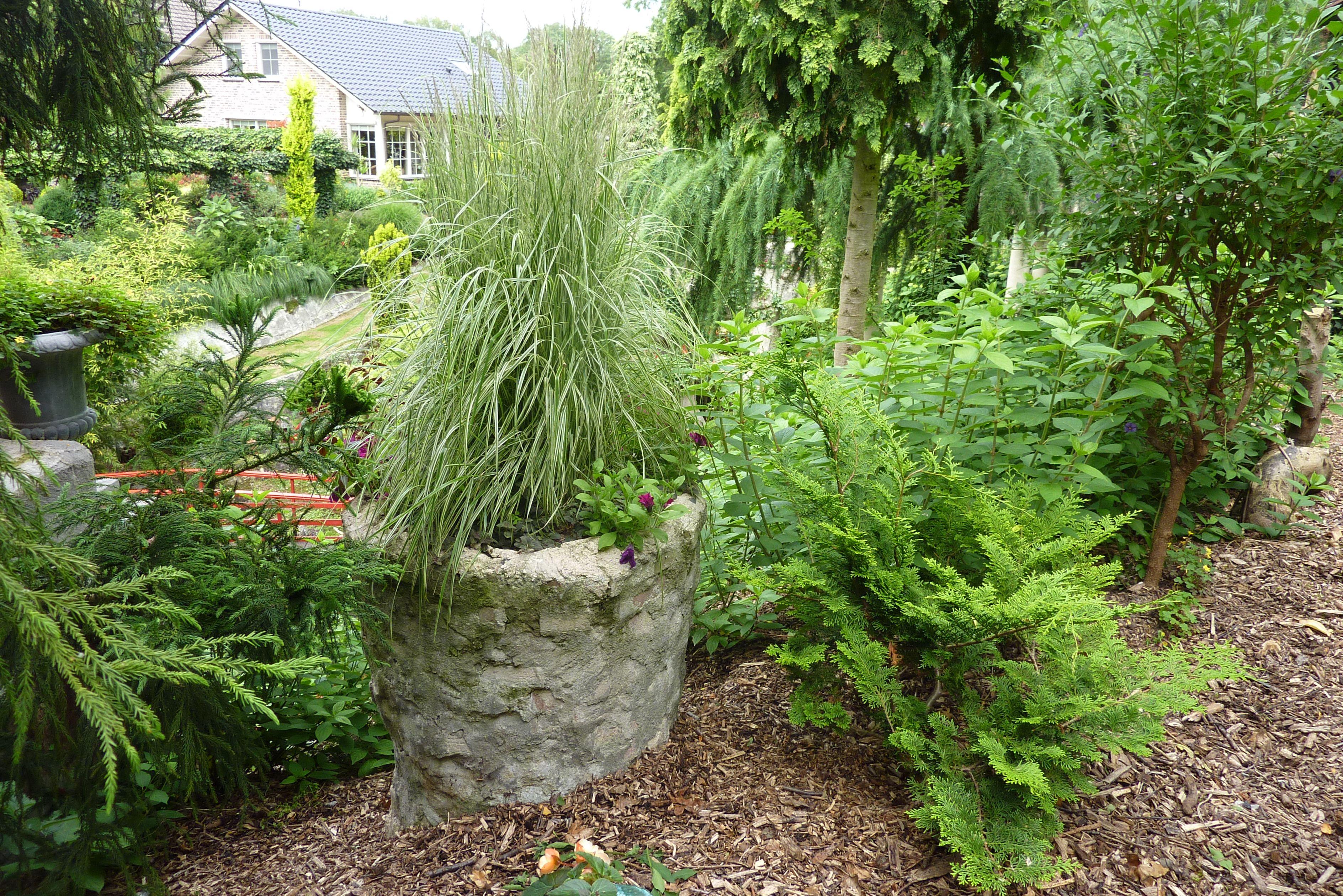 Gartenreise Holland Graser Im Kubel Stauden Gras Garten