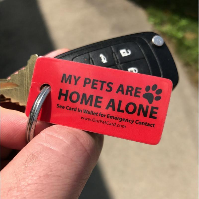 Pet Care Gift Box for Pets Cheap pet insurance, Pet care
