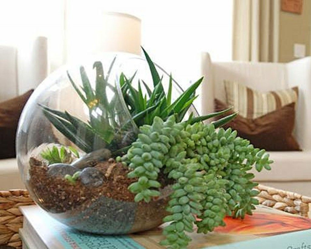 Uncategorized How To Make An Indoor Succulent Garden 25 indoor and outdoor succulent gardens of all sizes sizes
