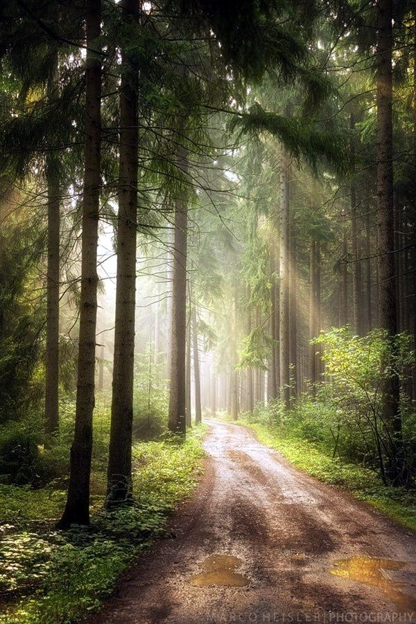 40 Fascinating Photographs Of Forest Paths To Another World Forest Path Beautiful Nature Beautiful Landscapes