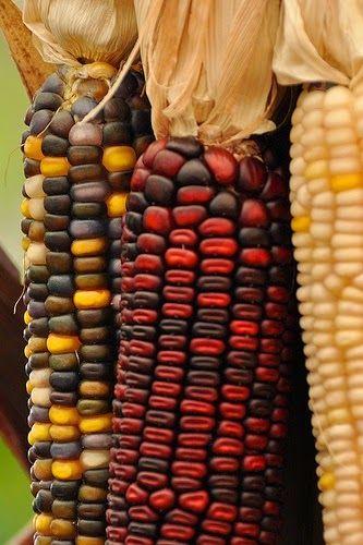 4 Season World: Autumn Corn