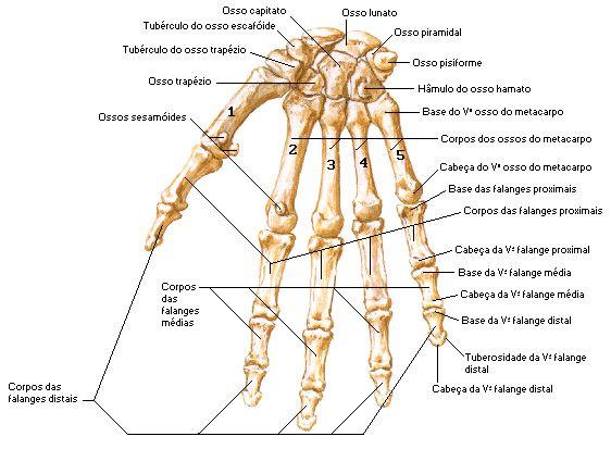 Chance de coágulo sanguíneo após cirurgia artroscópica do joelho