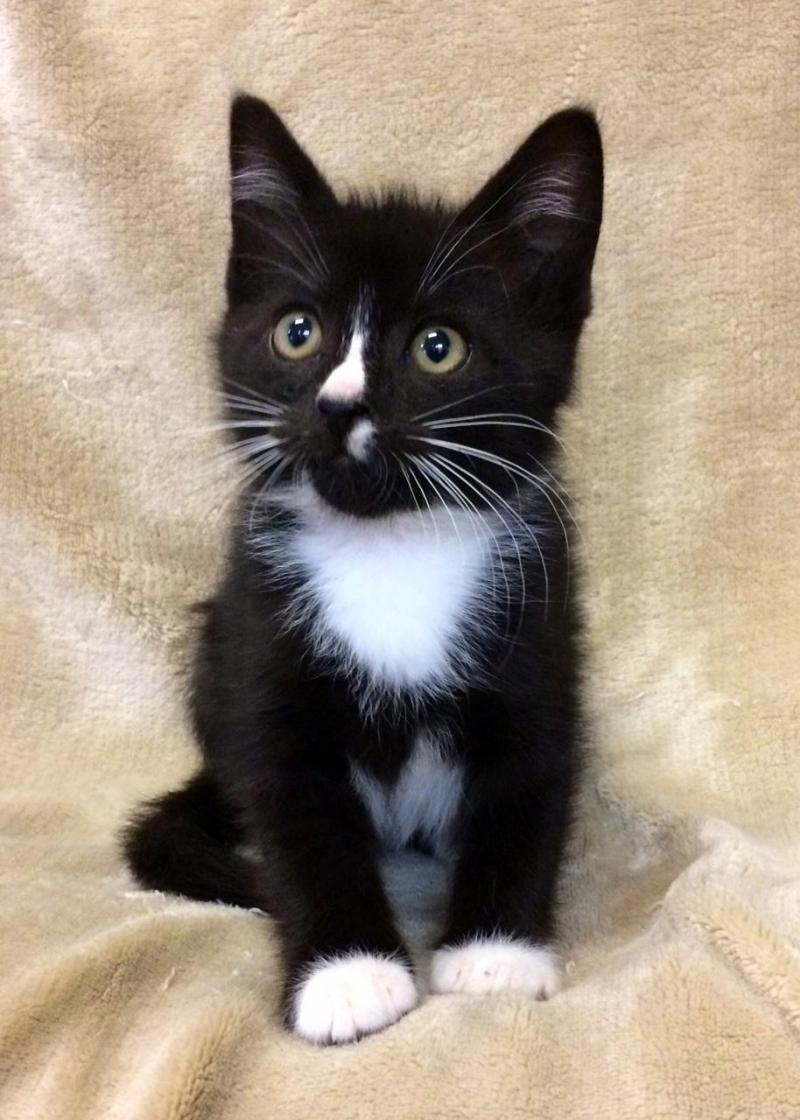 Adopt Minotaur on Cute cats, kittens, Cats, Cute cats