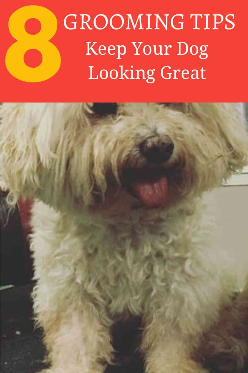 Why You Can Get More From Online Dog Grooming Courses Dog Care