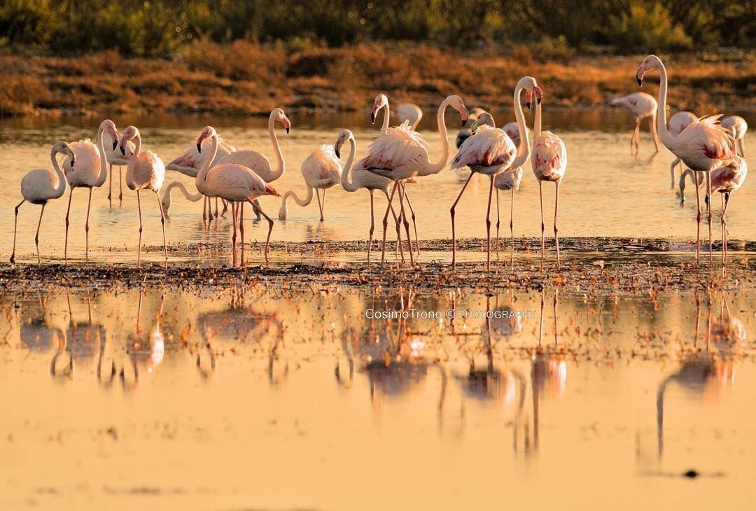 #beauty of #nature #pinkflamingo #salento #WeAreInPuglia #fotobycosimotrono #sunset #neverendingsummer #sanvalentino #sanvalentinoinpuglia #romanceinpuglia #romanceinmasseria #masseriatorrecoccaro