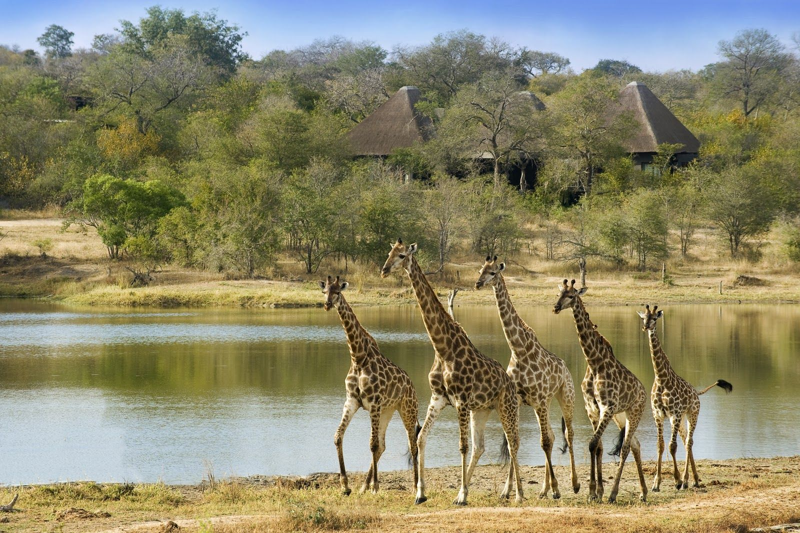 Kariega Game Reserve South Africa Game Parks And Reserves