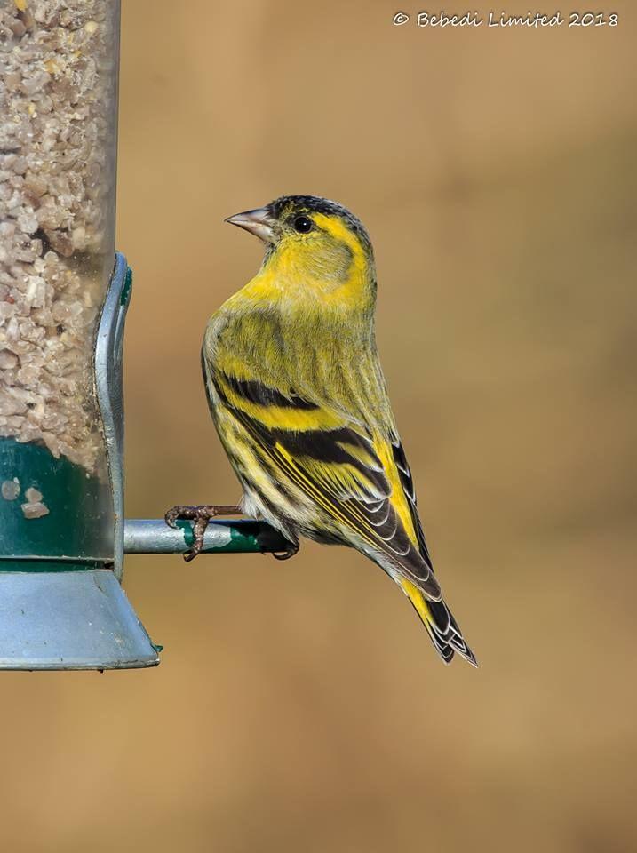 Top 25 Backyard Birds | Backyard birds, Birds, Great ...