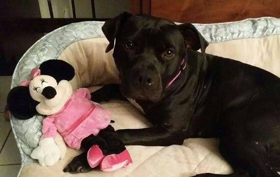 Elsa Is Sweet But Scared And Needs Foster Or Adoption In Chicago