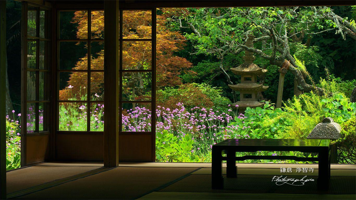 浄智寺客殿からヤナギハナガサ の壁紙 1366x768 壁紙 影 風景