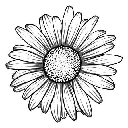 Belle monochrome, en noir et blanc fleur de margue