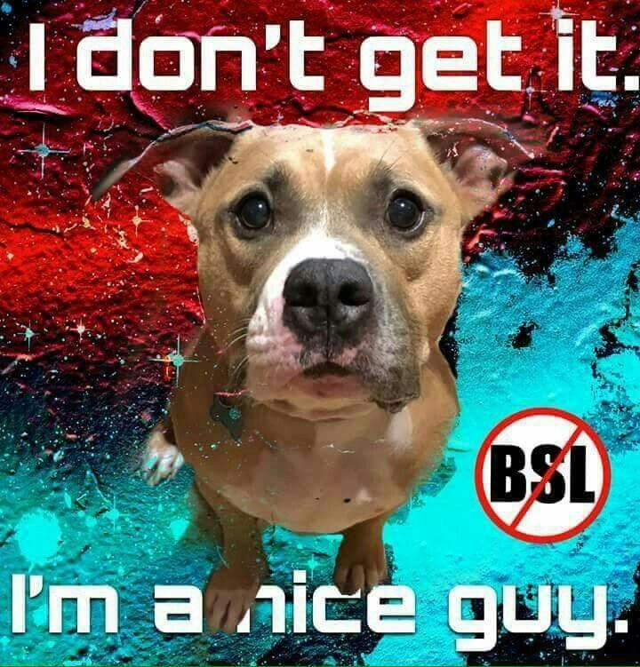 Fitting That They Are Called Bs Laws Animals Staffy Bull