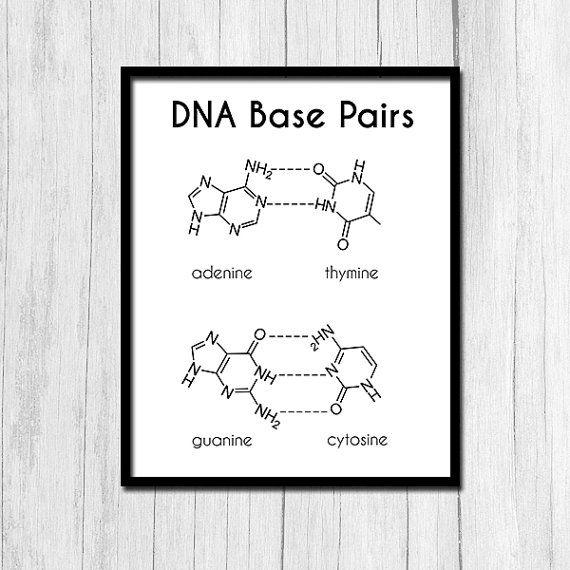Biology Art Dna Printable Art Dna Digital Download Geneticist Etsy Biology Art Dna Printable Art
