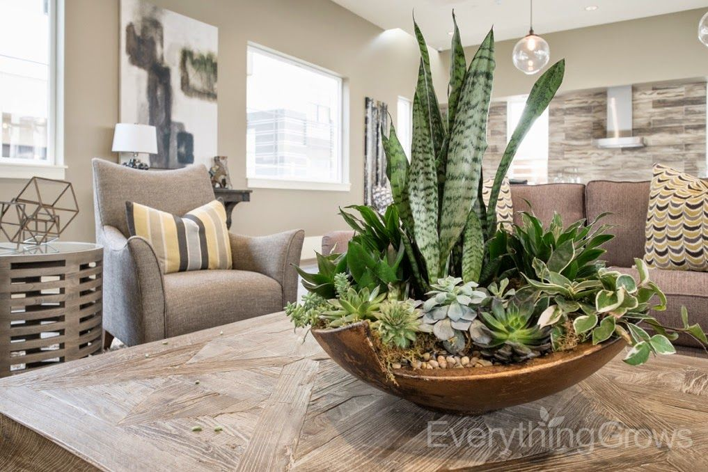 Everything Grows We Re Jumping With Model Home Requests House Plants Decor Indoor Plants Plant Decor