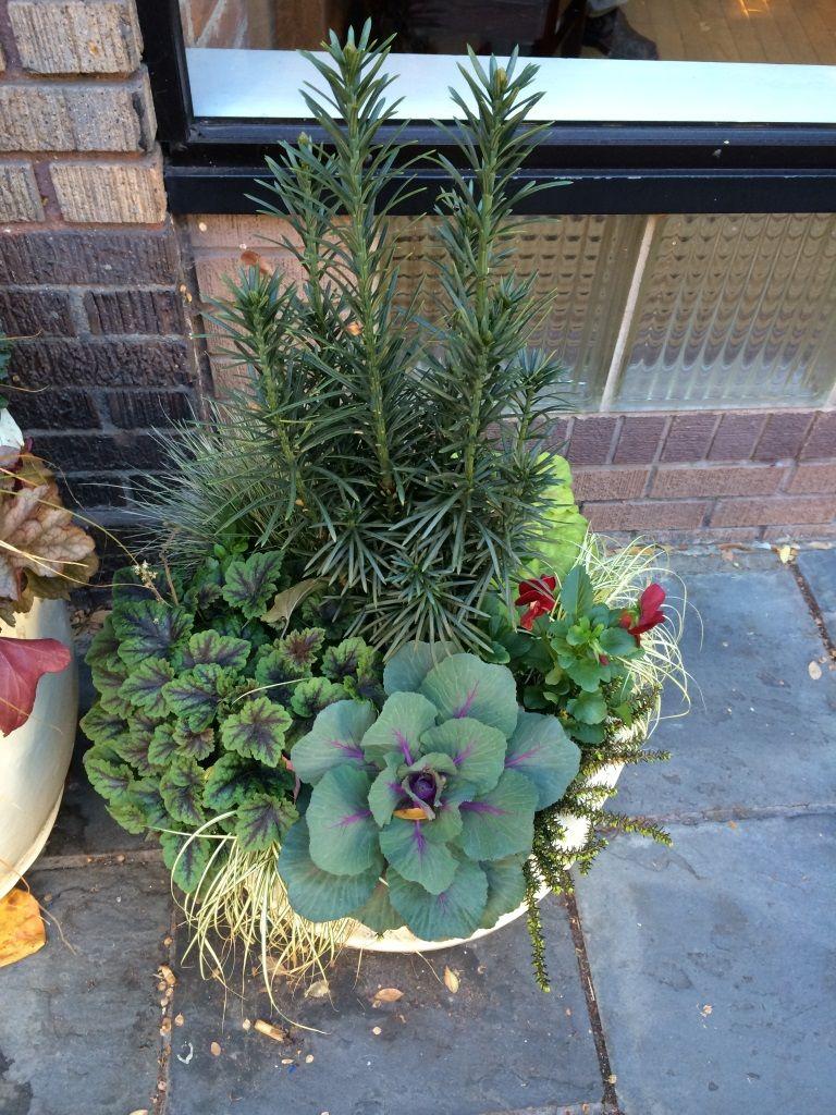 winter annual planter taxus heuchera winter pots pinterest