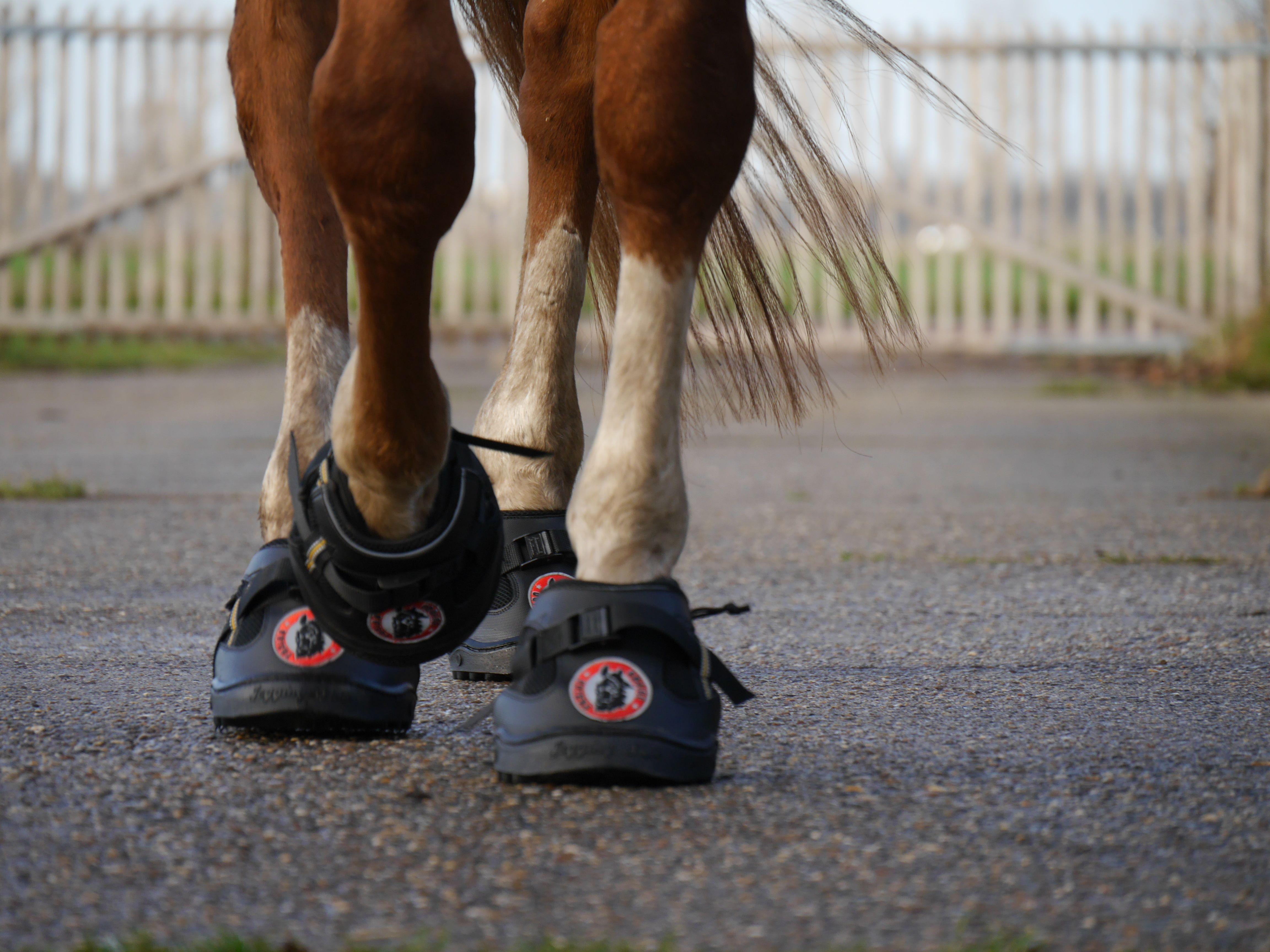 Flex hoof boots: all three sizes in stock at HoofWear