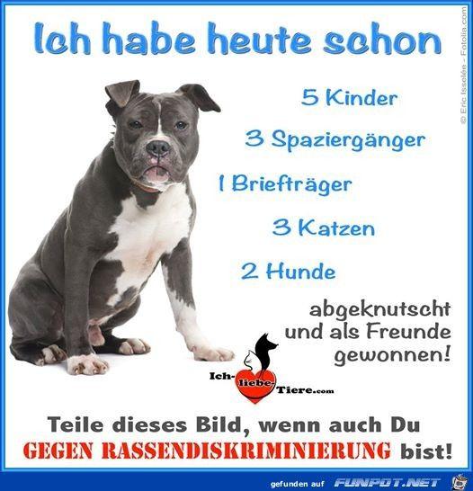 Rassendiskriminierung Dogs Dog Breeds Little I Love Dogs