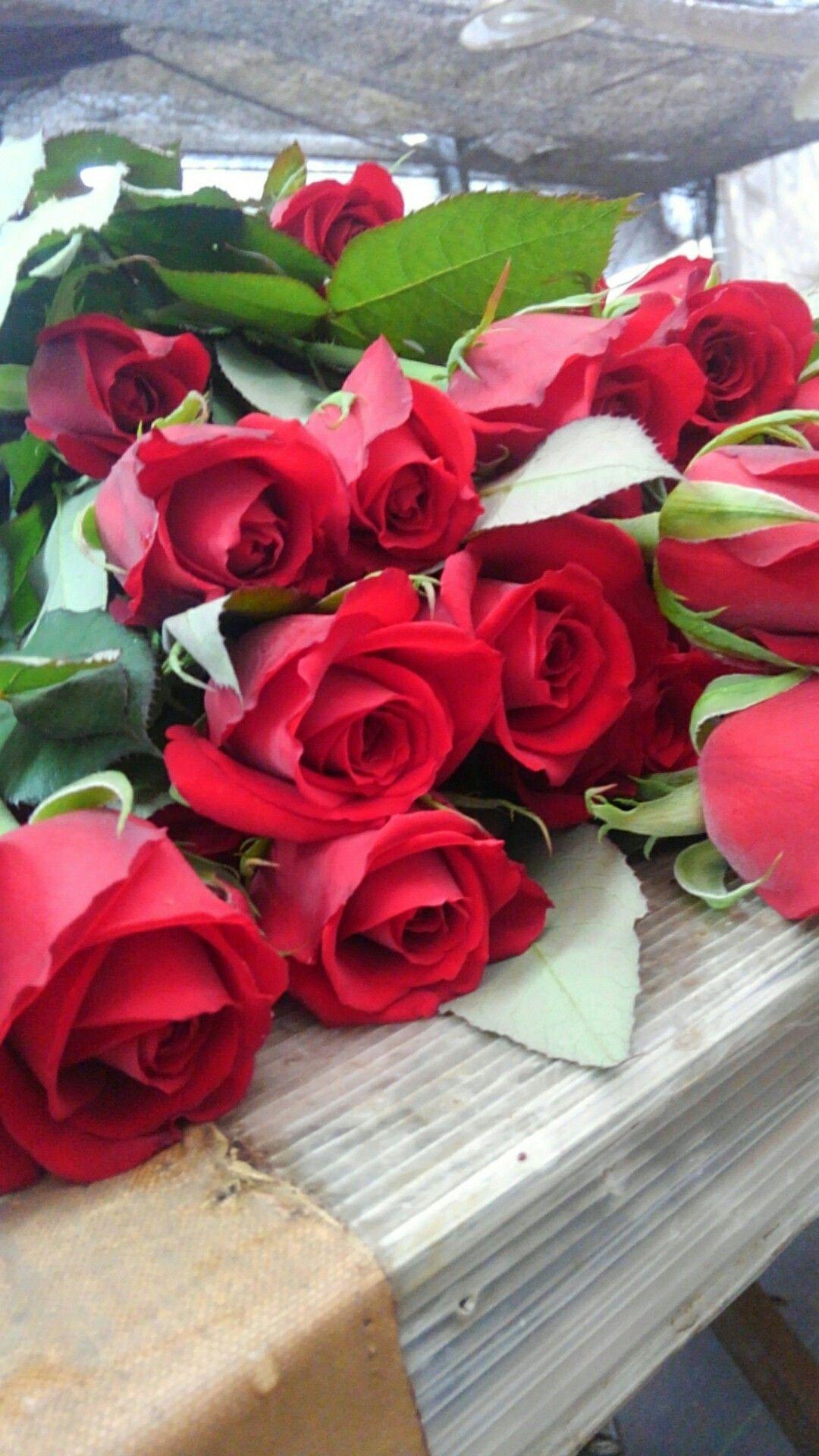 i¼—i¼˜a'µaƒ aƒa'¤ roses flowers red roses rose bouquet