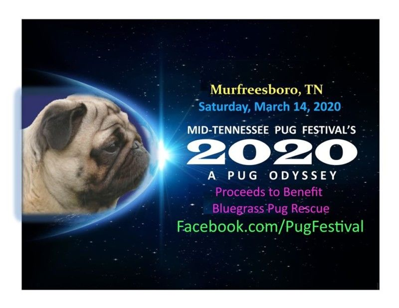 The 4th Annual Mid Tennessee Pug Festival Will Be Held On Saturday