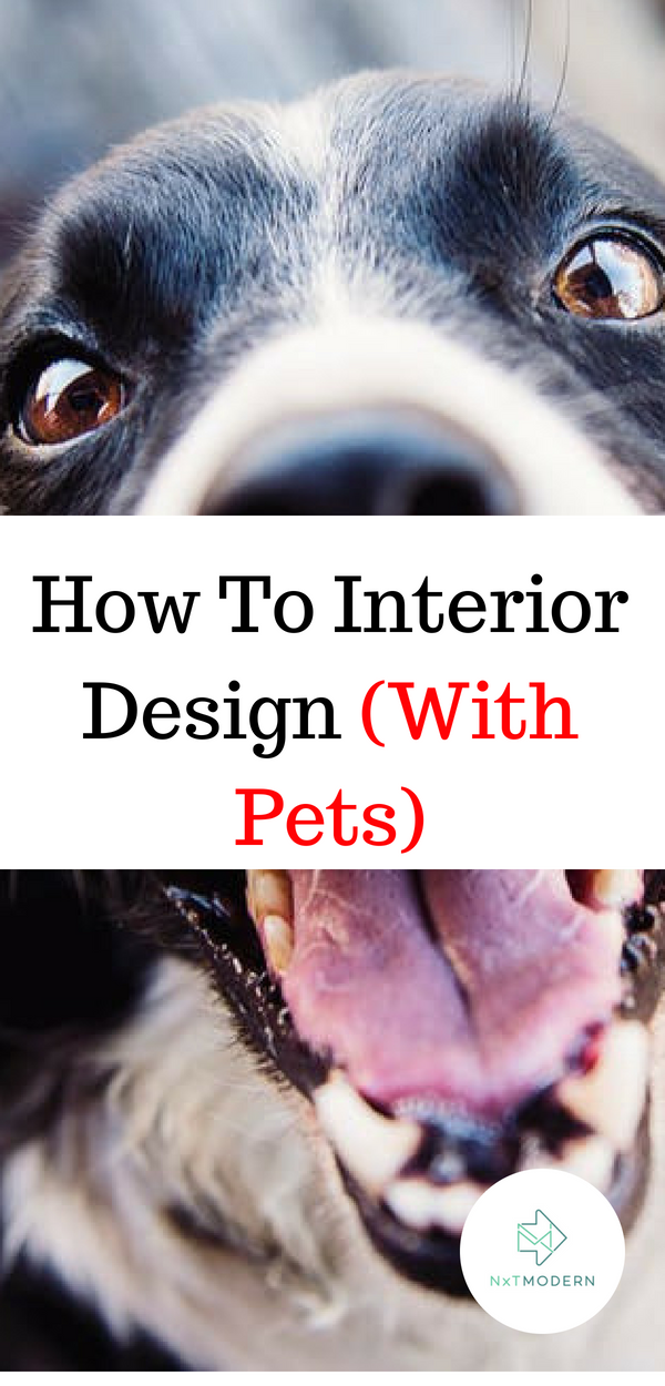 Interior Design For Pets How To Style Your Apartment Interior Design Design Interior