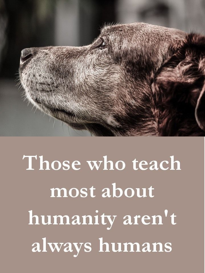 27 Beautiful Dog Quotes Some Touching Some Poignant Some