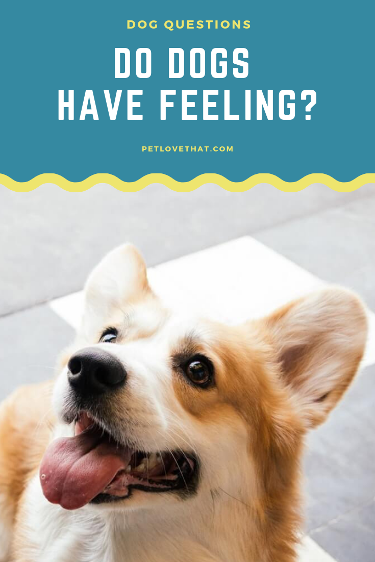 Do Dogs Have Feeling Dog training near me, Dogs, Dog