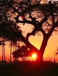 La Naturaleza siente y nos ama.