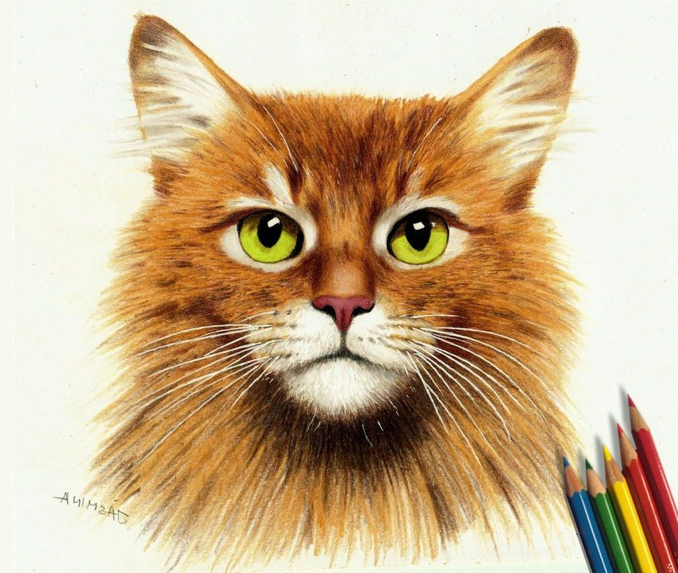 Animal Drawings In Color Pencil Colored Pencil Animal Drawings Color Sketch Col On Orange Oakleaf Butterfly Colored Pencils Drawing Oakl Desenho Figuras